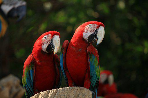 Macaw, Parrots, Bird, Colorful, Parrot, Perched