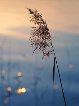 Lake, Reed, Frost, Grass, Dusk, Cold, Nature, Wintry