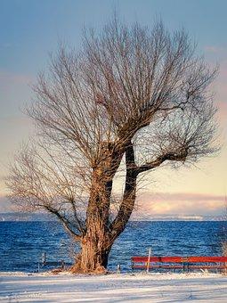 Tree, Lake, Bank, Road, Snow, Snowy, Wintry, Pasture