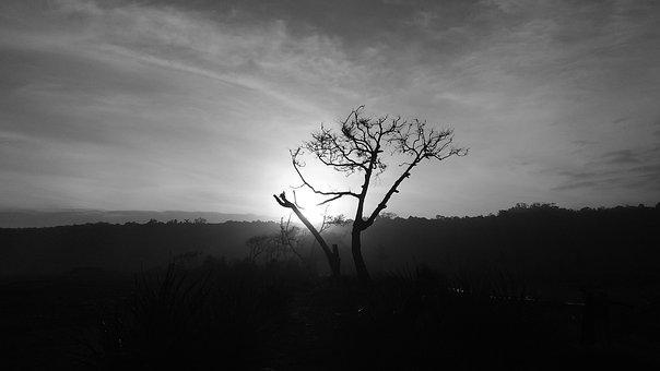 Tree, Sunset, Calm, Peaceful, Grayscale, Tranquil