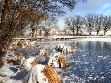 Lake, Pond, Trees, Frozen, Bank, Winter, Water