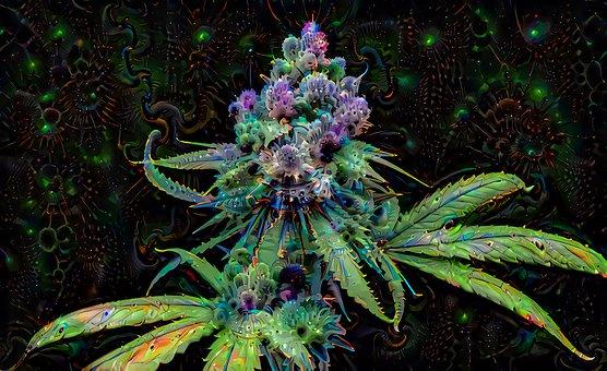 Sativa, Marijuana, Plant, Cannabis, Weed