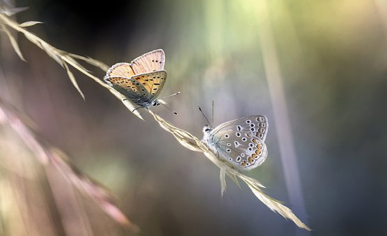 Butterflies, Insects, Grass, Wings