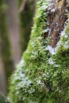 Moss, Tree, Snow, Winter, Ice, Frost, Wood, Trunk, Bark