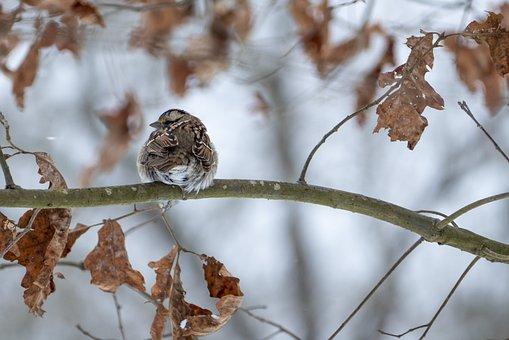Bird, Branch, Beak, Feathers, Animal, Warbler, Rumped