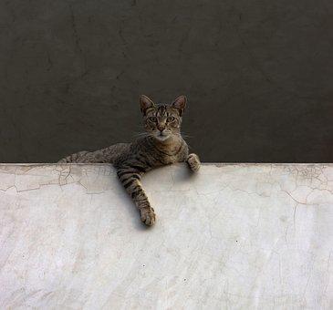 Cat, Kitten, Attentive, Stalking, Animal, Cat Lover