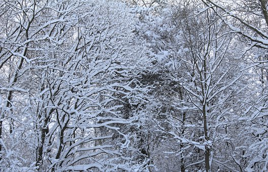 Winter, Trees, Snow, Frost, Cold, Branches, Backdrop