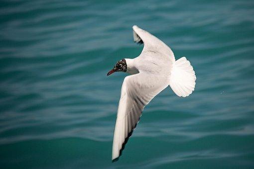 Seagull, Sea, Spain, Freedom, Bird, Water, Wing, Beach