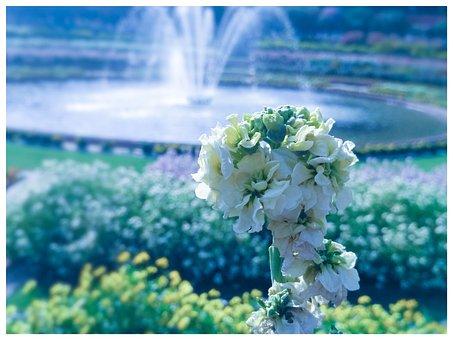 Garden, Park, Sprinkler, White Flower, Blossom, Bloom