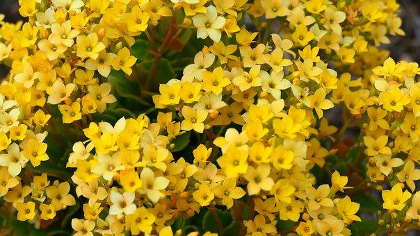 Flowers, Yellow, Bloom, Blossom
