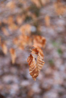 Autumn, Leaves, Dried, Dried Leaves, Dried Foliage