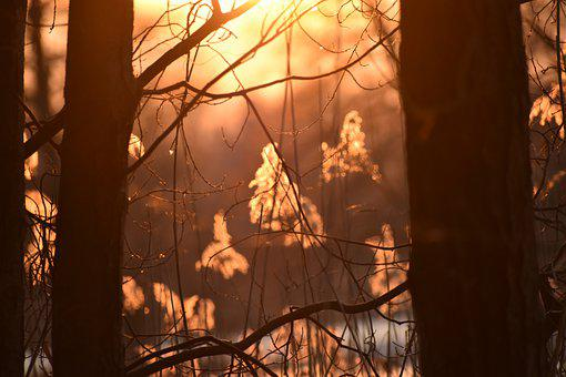 Early Spring, Melting, Evening, Nature, The Sun, Forest