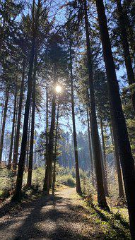 Early Spring, Forest, Nature, Late Winter, Backlighting