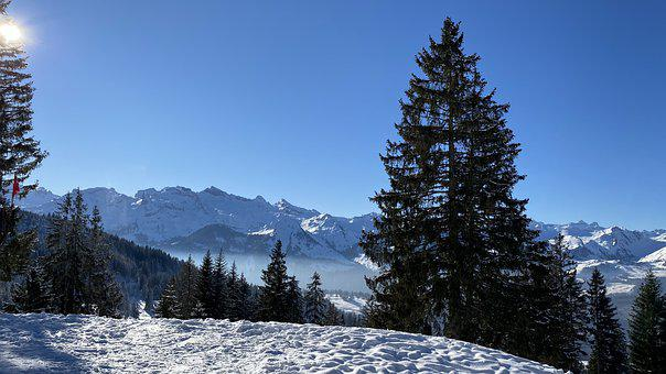 Winter, Fir Tree, Spruce, Mountains, Sunshine, Cold
