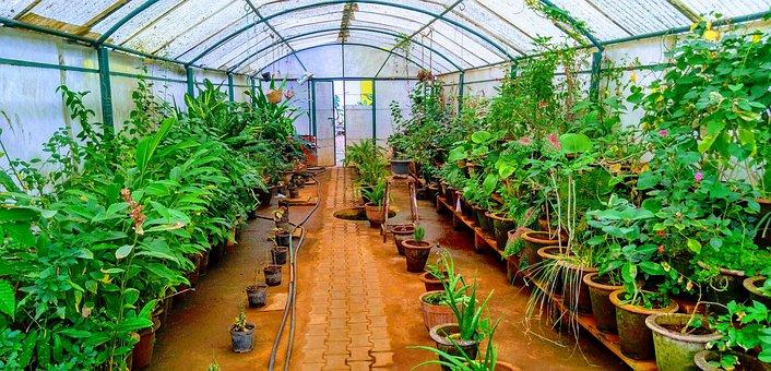 Greenhouse, Plants, Botany, Flowerpot, Flora, Garden