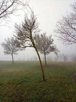 Fog, Tree, Wrong, Nature, Atmosphere, Winter, Landscape