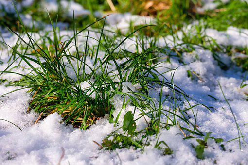 Snow, Grass, Winter, Snowy, Wintry, Hoarfrost, Frost