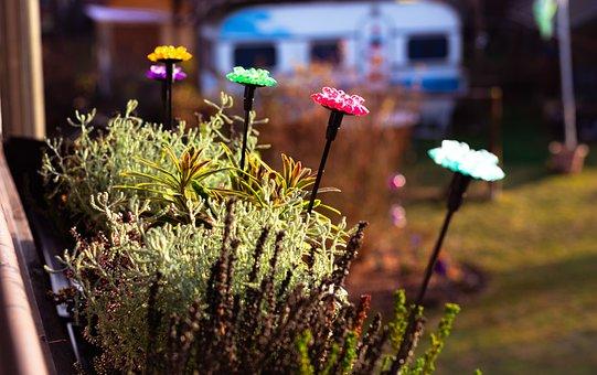 Plant, Deco, Flower, Nature, Garden Design, Sunshine