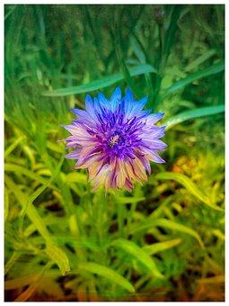 Plant, Garden, Colorful Flower, Grass, Summer