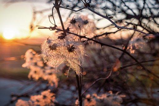Sunset, Blossom, Bloom, Nature, Reflection, Landscape