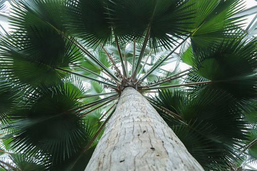 Palm Tree, Leaves, Trunk, Branches
