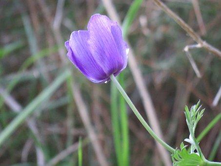 Cyclamen, Nature, Flower, Flora, Pink, Green, Violet