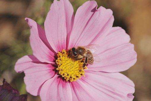 Flower, Bee, Pollen, Pollination, Petals, Nature, Plant