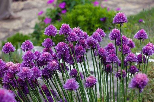 Purple Flowers, Flowers, Field, Floral, Botanical