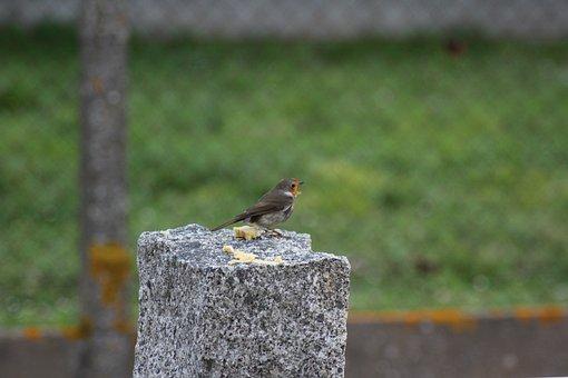 Robin, Bird, Nature, Animal, Spring, Wildlife, Garden