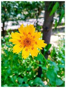 Yellow Flower, Garden, Sunflower, Bloom, Coneflower