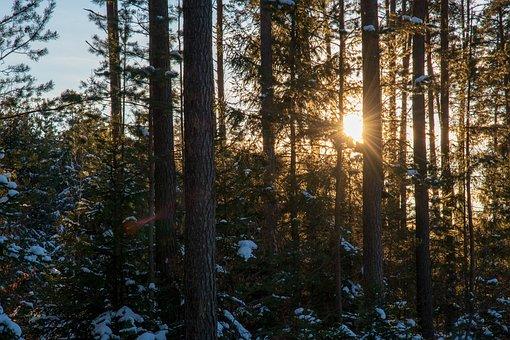 Sun, Trees, Forest, Nature, Landscape, Sunset, Light