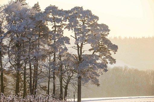 Ice Cold, Snow Load, Winter Dream, Sunshine