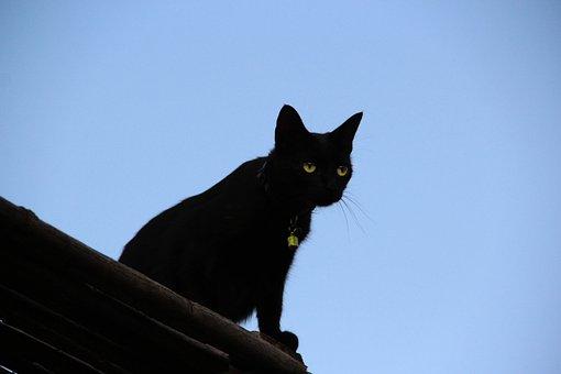 Gatto, Tetto, Miabi, Cat, Kitty