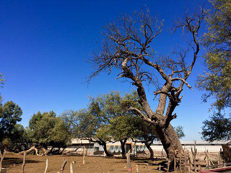 Tree, Sonora, Rural, Nature, Branch