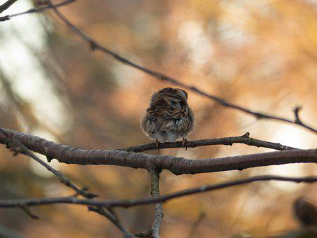 Tree Sparrow, Bird, Nature, Animal, Plumage, Branch