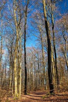 Trees, Forest, Nature, Away, Landscape, Light, Sun