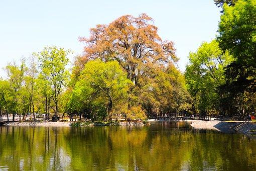 Yellow, Green, Lake, Landscape, Tree, Nature, Leaves