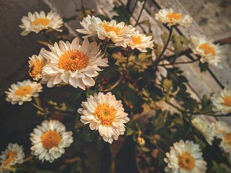 Flower, Bouquet, Floral, Chrysanthemum, Bloom