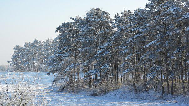 Forest, Winter, Icy, White, Landscape, Snow, Cold