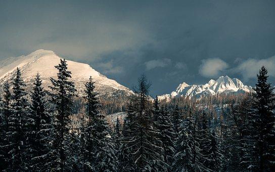 Mountains, Trees, Conifers, Coniferous