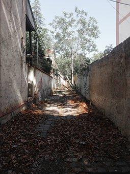Alone, Desolation, Abandoned, Leaves, Corridor