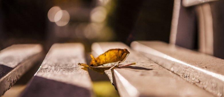 Wooden, Bench, Fall, Fallen Leaf, Dried Leaf, Autumn