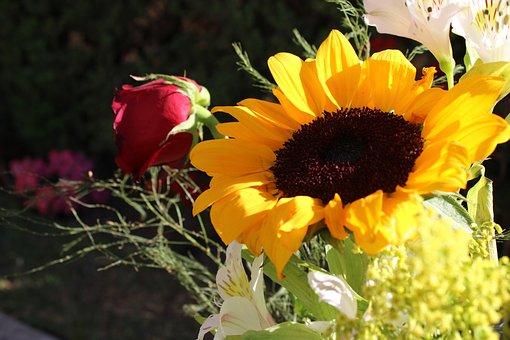 Sunflower, Flower, Sun, Yellow, Flowers, Nature, Petals