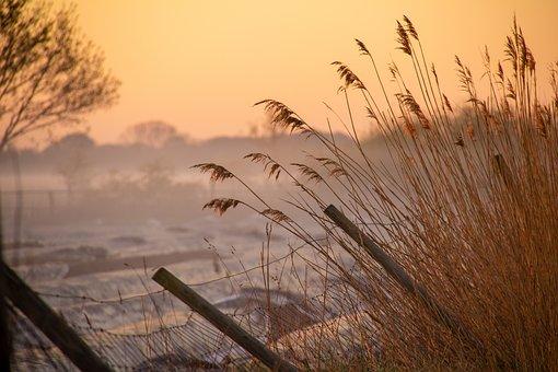 Fog, Field, Meadow, Landscape, Nature, Morning, Sunrise