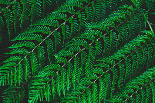 Green, Leaves, Foliage, Plants, Fern, Fern Leaves