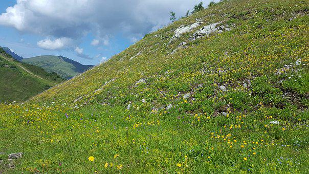 Alm, Meadow, Nature, Alpine, Mountains, Hiking, Summer