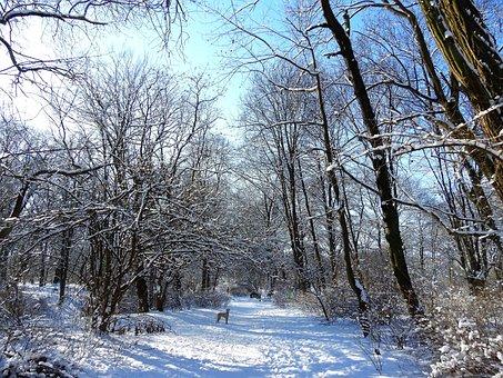 Winter, Park, Tree, Snow, Nature, Landscape, Frost