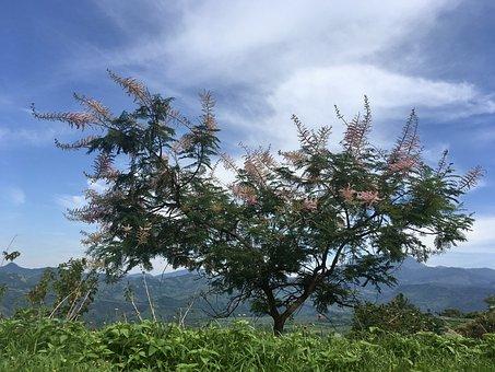 Tree, Light, Landscape, Optimism, Mood, Nature