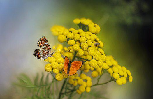 Butterflies, Flowers, Insects, Pollinate, Pollination