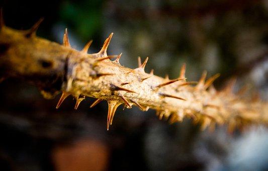 Plant, Dorne, Sting, Cactus, Prickly, Close Up, Spur